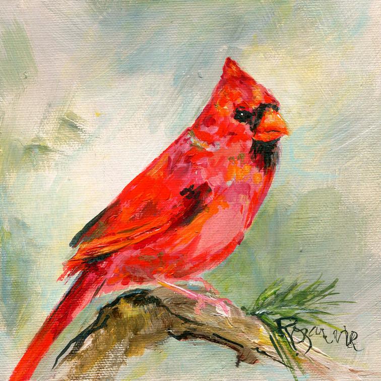 264 male cardinal on pine branch 6x6.jpg
