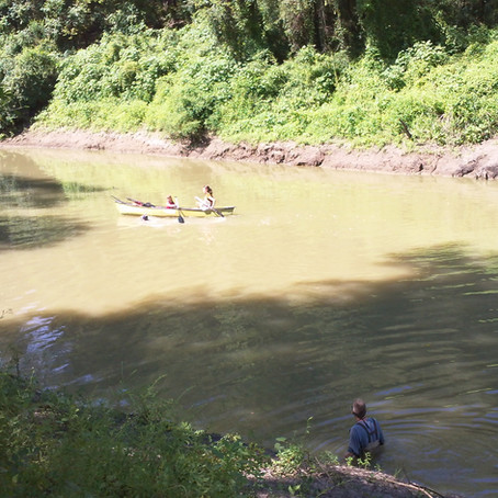 Help Save the Sulphur River!