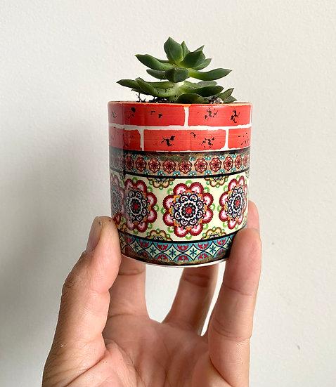 Orange Mediterranean Pot w/ Succulent