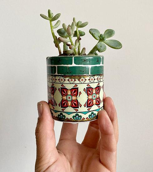 Green Mediterranean Pot w/ Succulent
