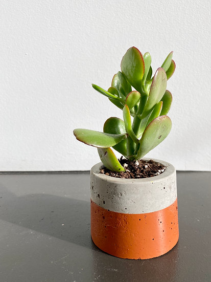 Orange Round Planter w/ Jade Succulent