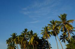 Sri Lanka 017.jpg