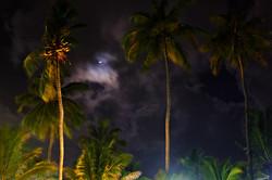 Sri Lanka 009.jpg
