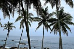Sri Lanka 021.jpg