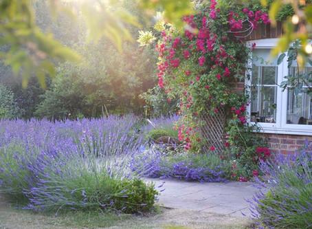 The Great British Garden Show