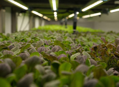 What is vertical farming and why do we need it?