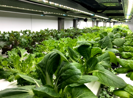 How vertical farming changed the way I think (and eat!)
