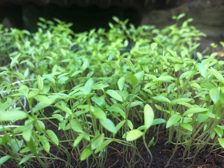 Time to learn to grow your own … herbs