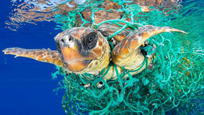 Is there a Sustainable Solution to Reduce Plastic Waste?