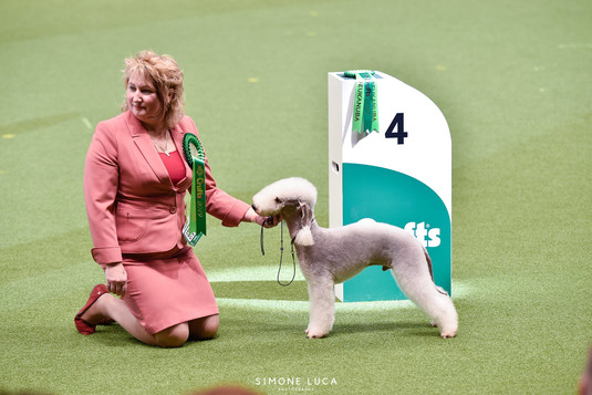 Crufts Group 4 L'End Show Metti Suprise At Glare