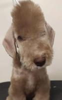 Sweet puppy Tux