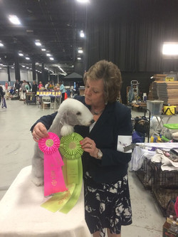 NOHS Reserve Best In Show