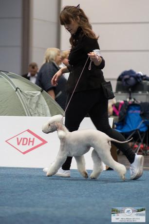 Mor Ch.Velvety Follow The Dream World Dog Show
