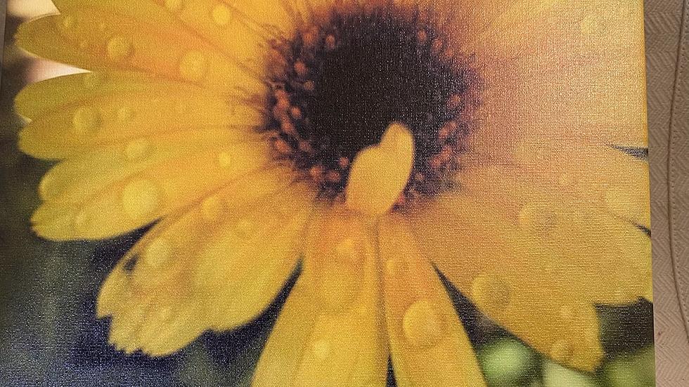 11x14 Canvas Yellow Rain