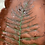 Thumbnail: Tray with Fern