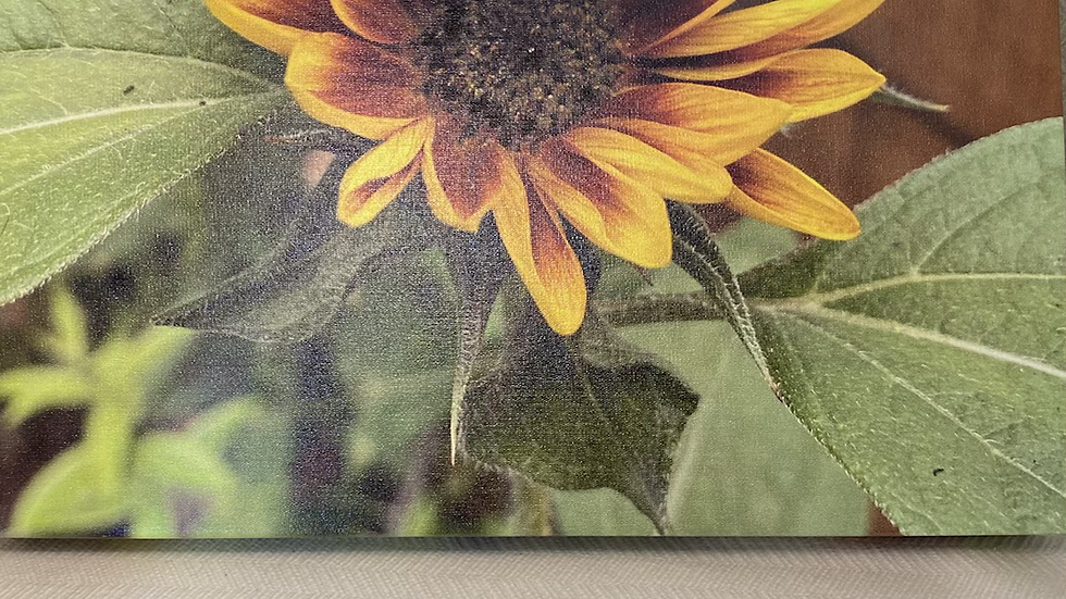 11x14 Canvas Mixed Sunflower