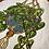 Thumbnail: Tray with Pathos