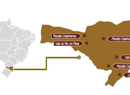 A PRODUÇÃO DE VINHOS DO BRASIL - PARTE 5 - SANTA CATARINA