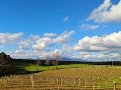 Vineyard Cover.jpg