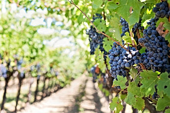 grapes-553462_1920.jpg