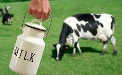 cowsmilk-485x300.jpg