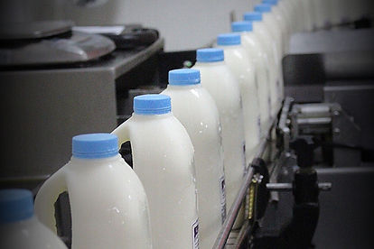a2 Milk on processing line
