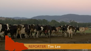 ABC Landline reports on the dairy industry shake up
