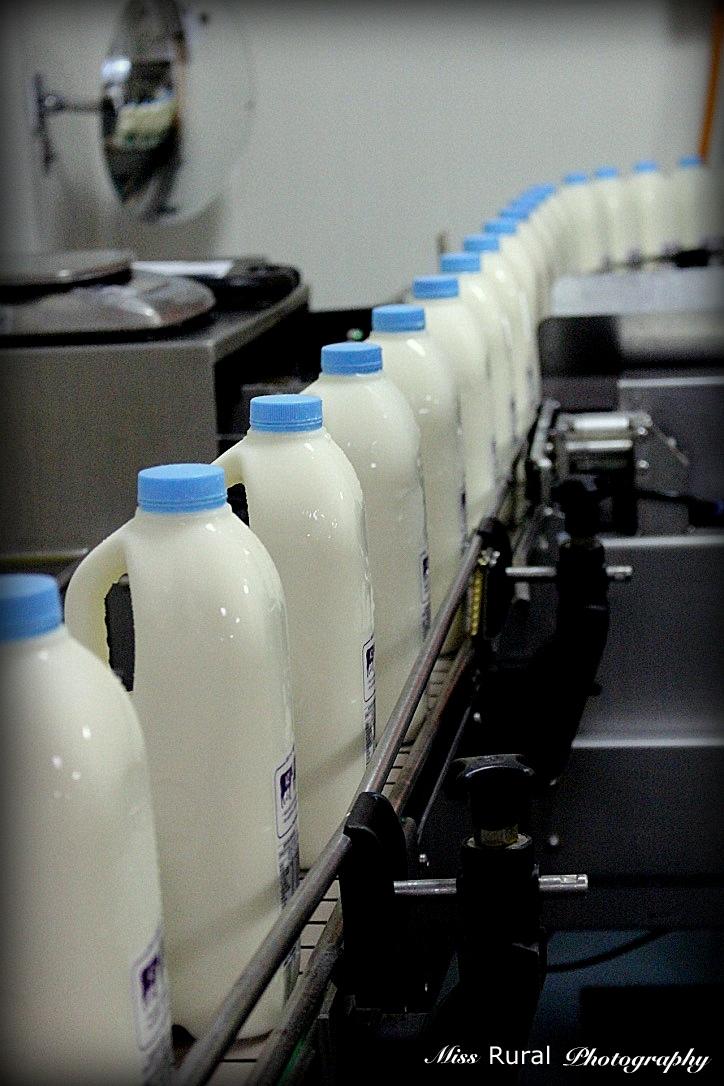 Milk bottles on line