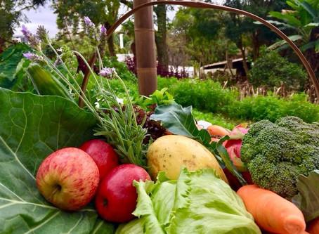 Biolabore firma parceria para assistência em certificação orgânica a produtores