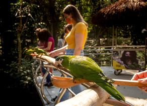 Parque das Aves recebe mais de 7.500 turistas no feriadão