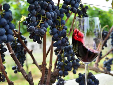 Comemorar a pesquisa brasileira com uva e vinho