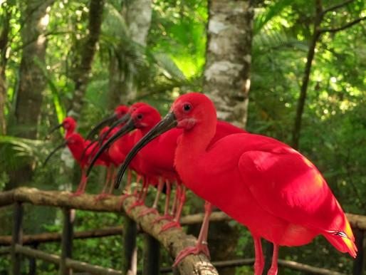 Novo horário de funcionamento do Parque das Aves a partir de 27 de abril