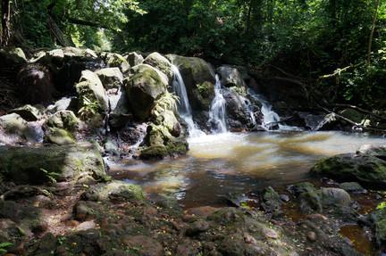 Slow Jungle Stream
