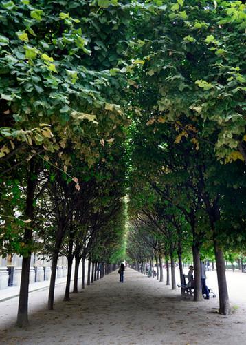 Tree tunnel - September, 2013