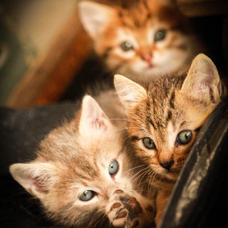 Portrait chatons sauvages