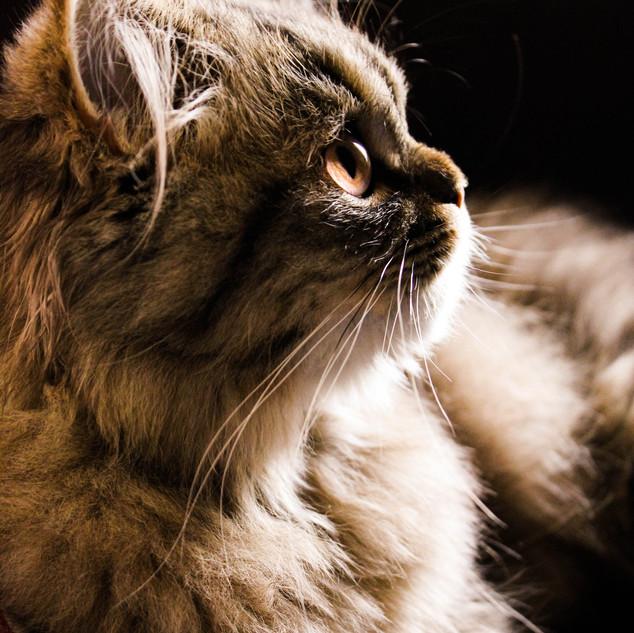 Portrait chaton