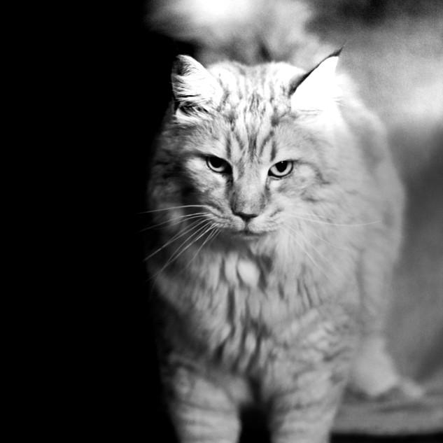 Portrait Chat