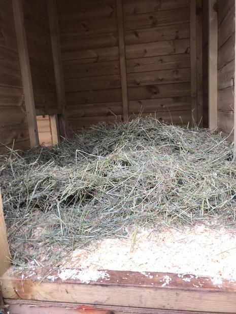 Hay & Wood Shavings Bedding