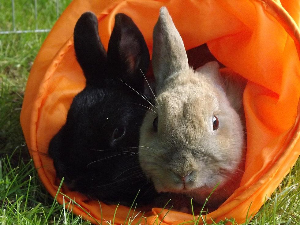rabbit-361666_1280.jpg