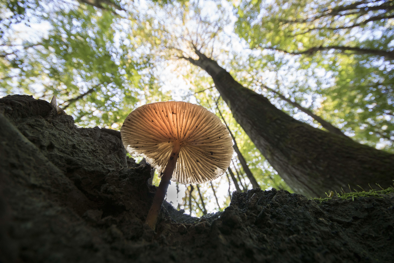 Bospaddenstoel