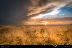 Polder van Zuidland