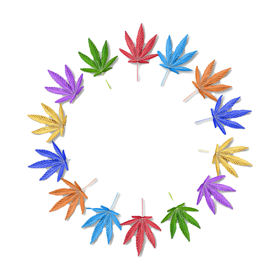 Colorful%20leaves%20of%20hemp%20or%20can