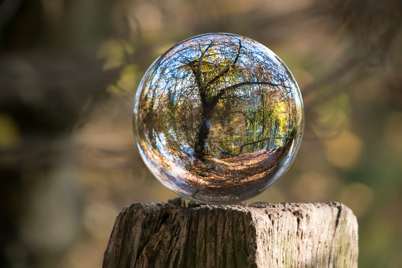tree_in_bubble