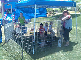 Pony Passion LLC is Arizona's premiere provider of pony rides and petting zoo.