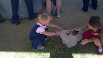 Brush the animals in our petting zoo.