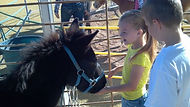 Kids can feed the animals in our petting zoo.
