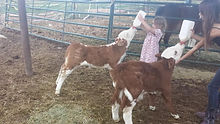 Our petting zoo is very hands on.  Kids can hold, pet, and feed the animals.