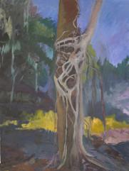 The Strangler Fig tree, oil on canvas,100x80cm