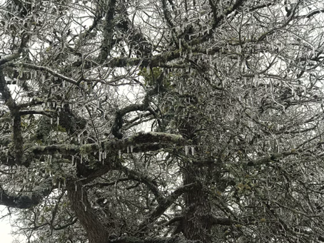 Frosty in Fischer Texas Today