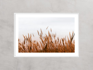White Frame Border.jpg
